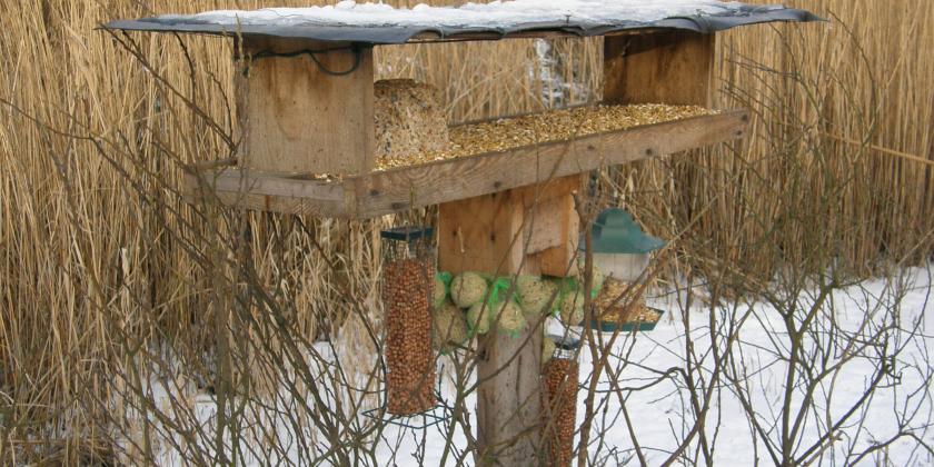 Vogels voeden – in de Kuifeend en elders
