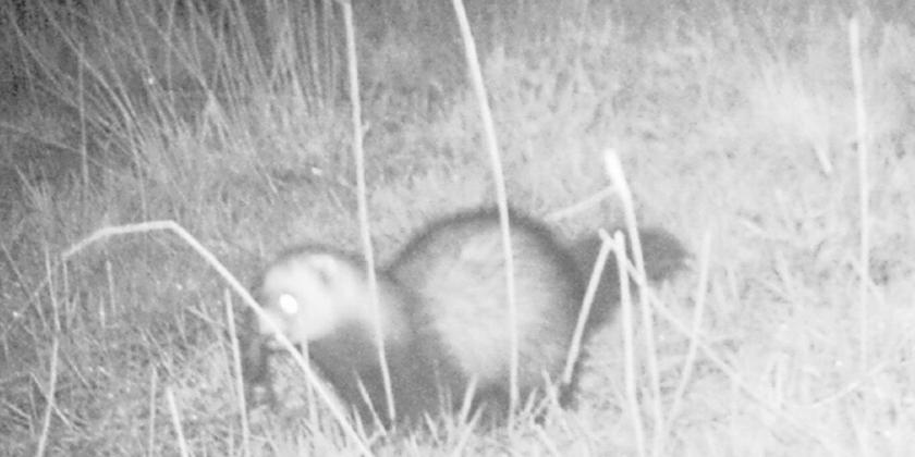 Wildcamera zorgt voor extra waarnemingen