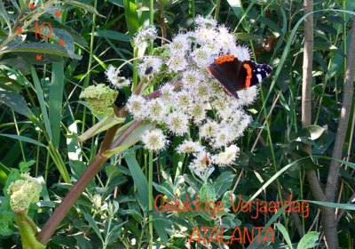 Vlinderwerkgroep