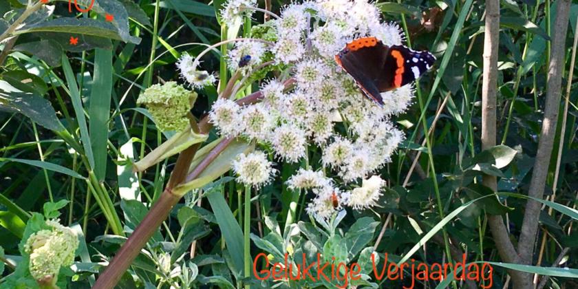 Vlinderwerkgroep Atalanta bestaat 10 jaar!
